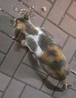 kitty_Fotor.jpg